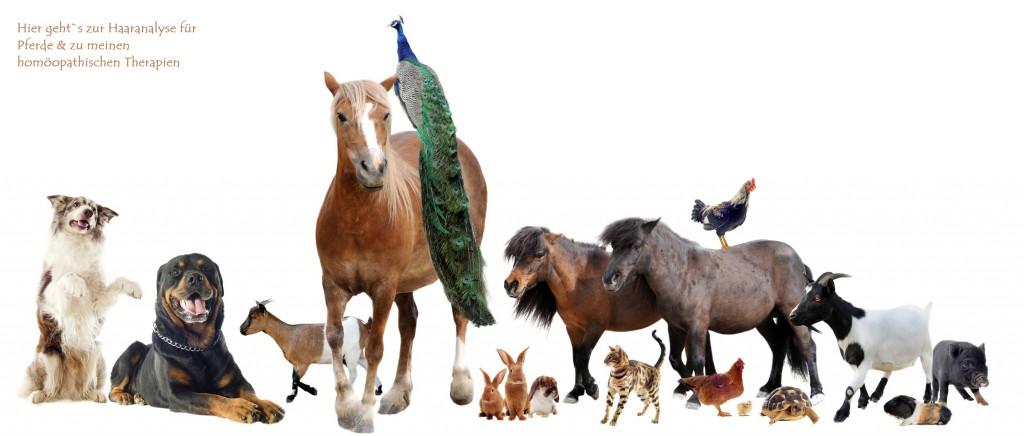 Naturheilkunde für Pferde