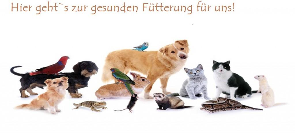 Fütterung Hunde, Katzen, Kleintiere