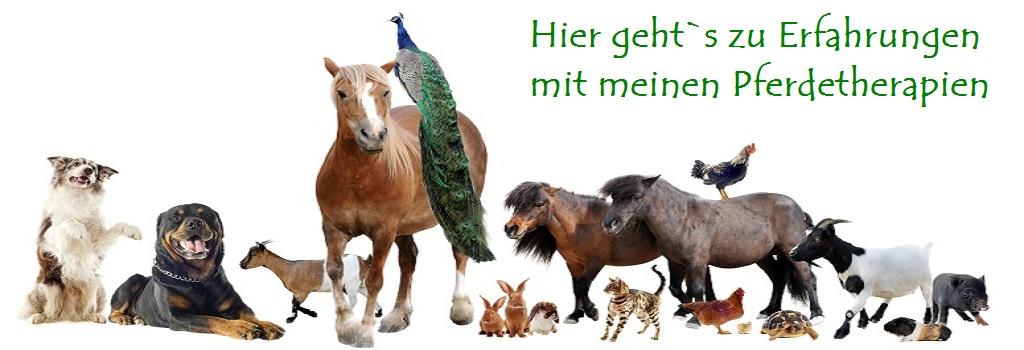 Tierheilpraktiker