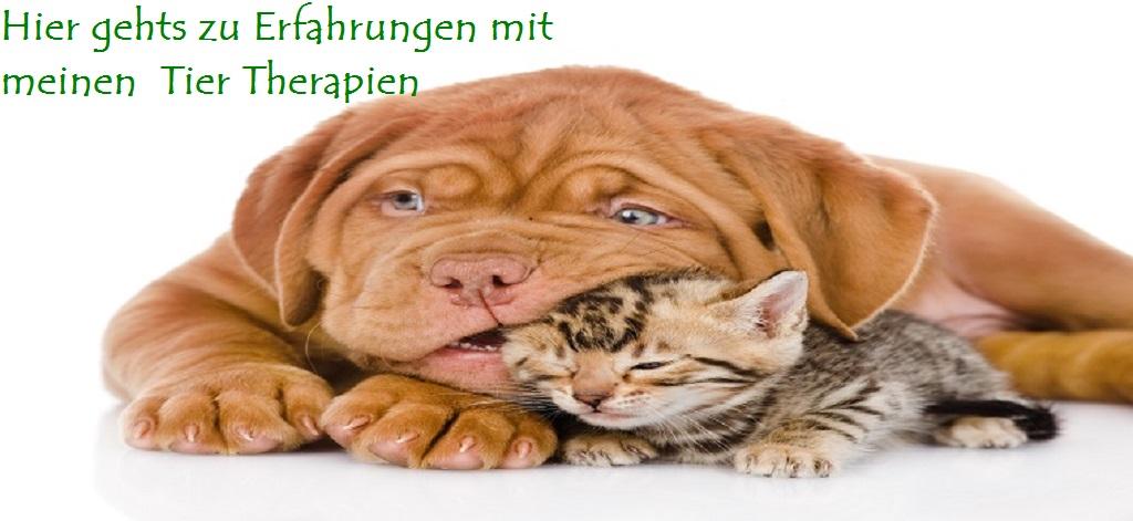 Beratung für Tiere
