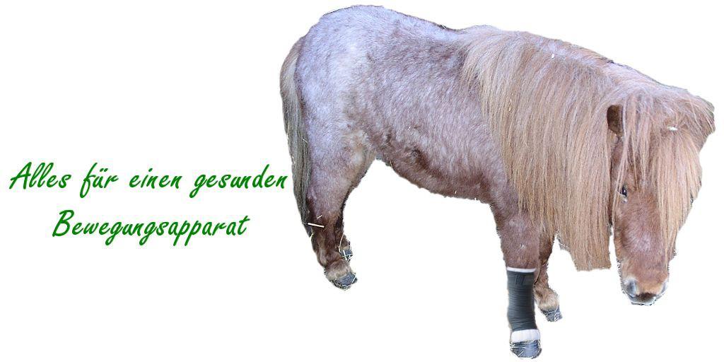 Sehnen bei Pferden
