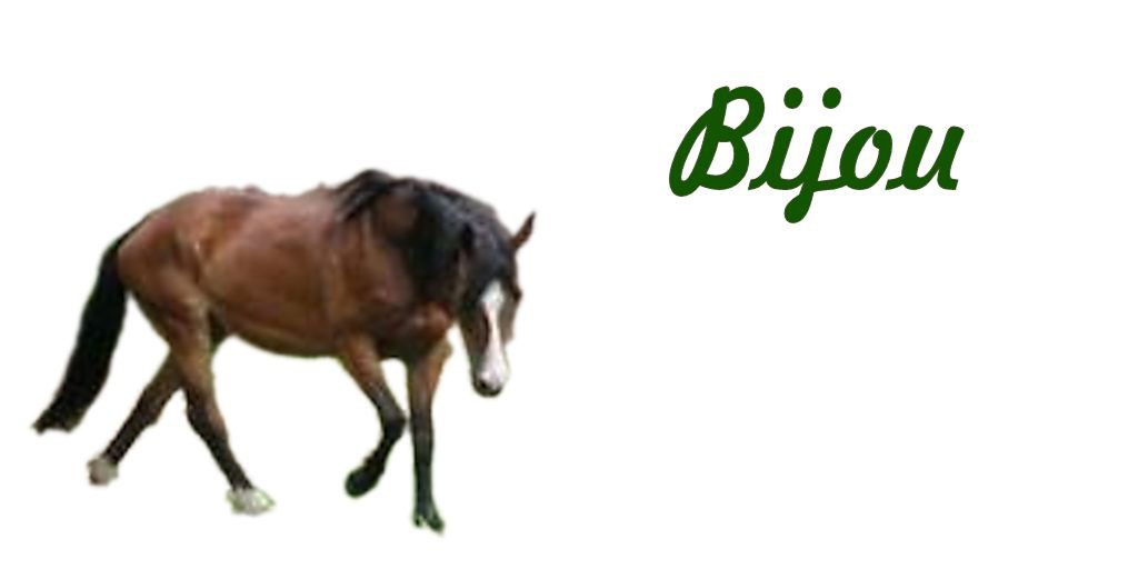 Tierheilpraxis Erfahrungen bei Pferden