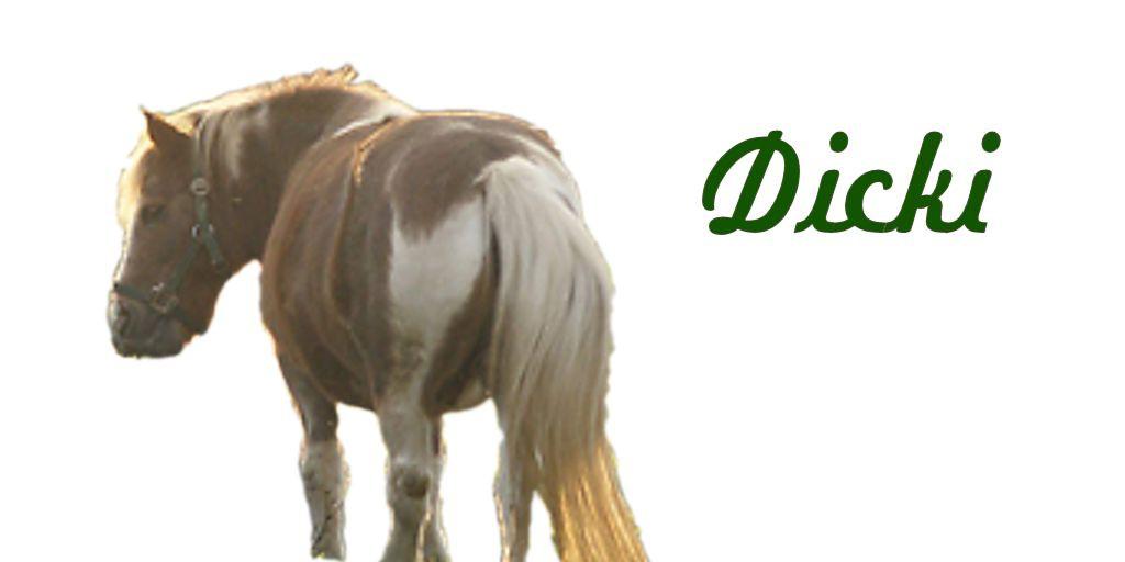Erfahrungen bei Pferdekrankheiten