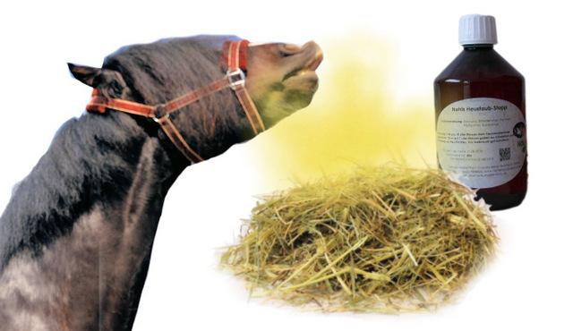 Heustauballergie Pferd