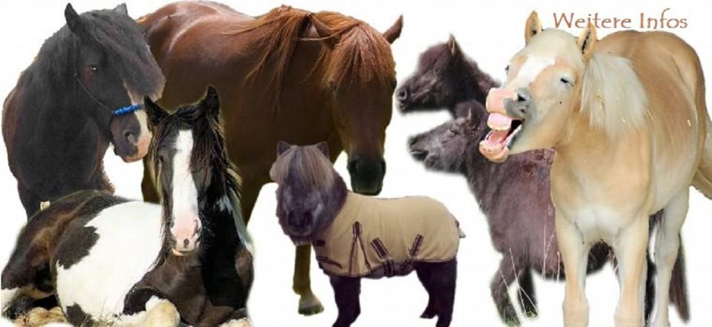 Würmer bei Pferden