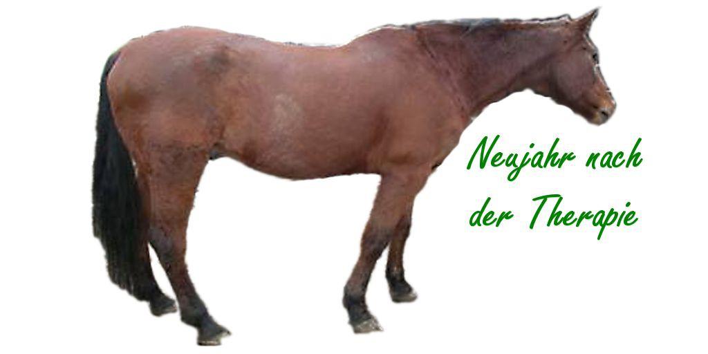 dünnes Pferd füttern