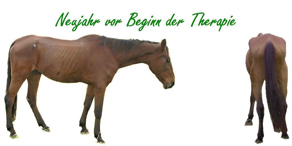 Fütterung bei dünnen Pferden