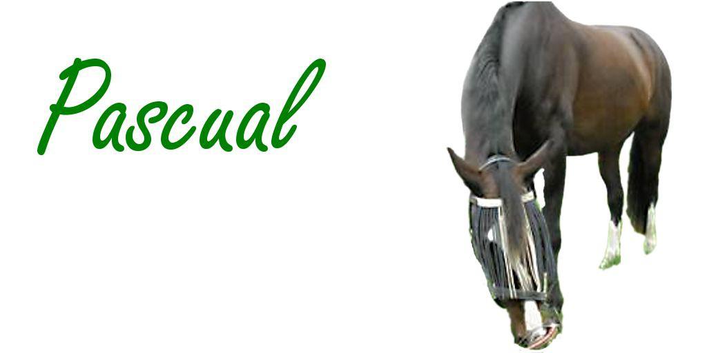 Haaranalyse Erfahrungen mit Pferde