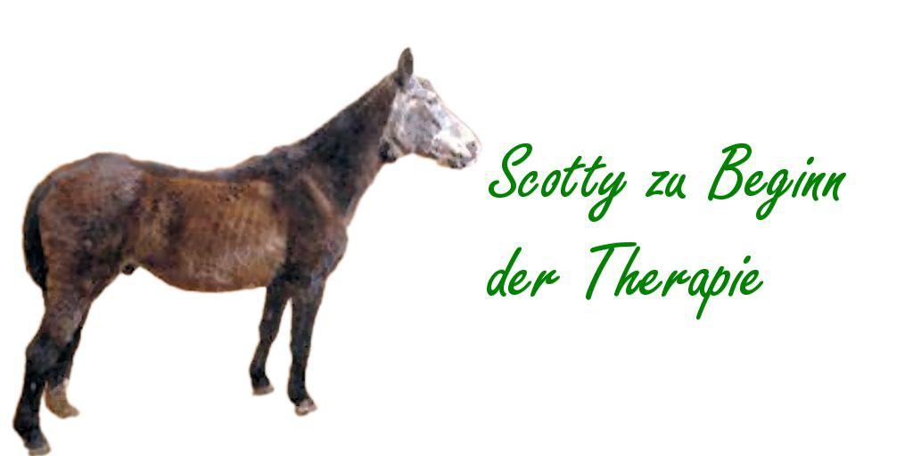 Haaranalyse Erfahrungen Pferde