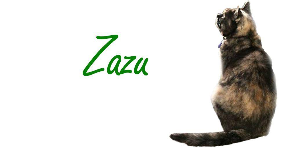 Tierheilpraxis Erfahrungen Katze
