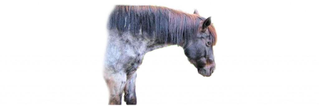 Cushing Pferd