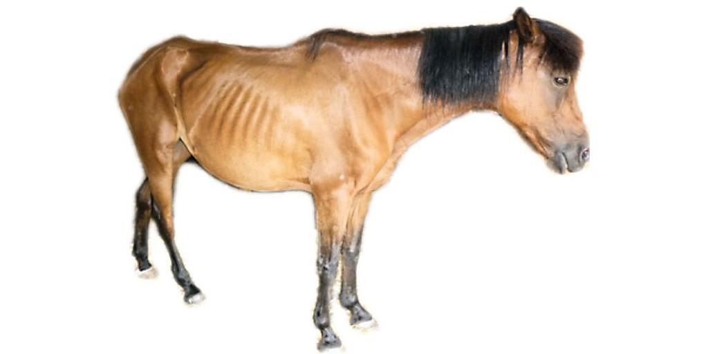 Erfahrungen bei Pferden