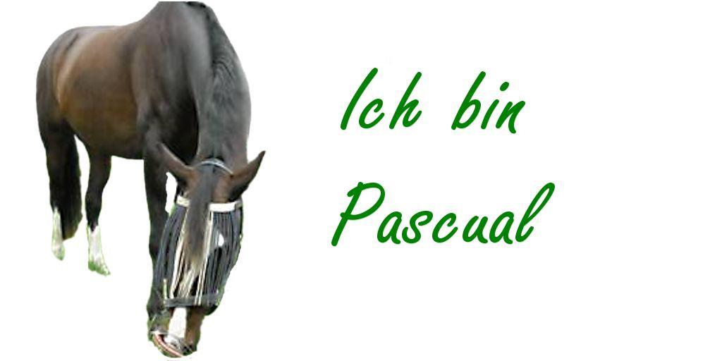 Bronchitis Erfahrungsberichte bei Pferden
