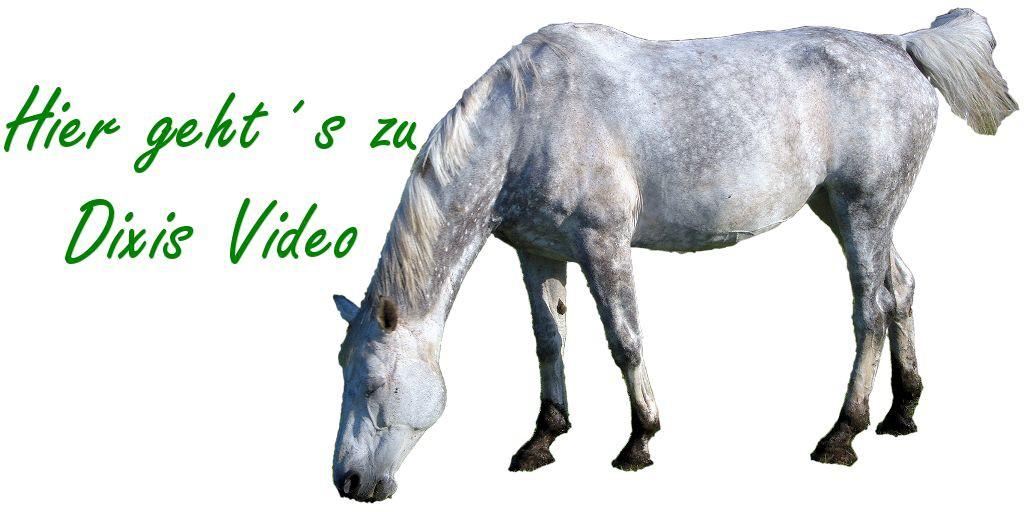 Bronchitis Pferd