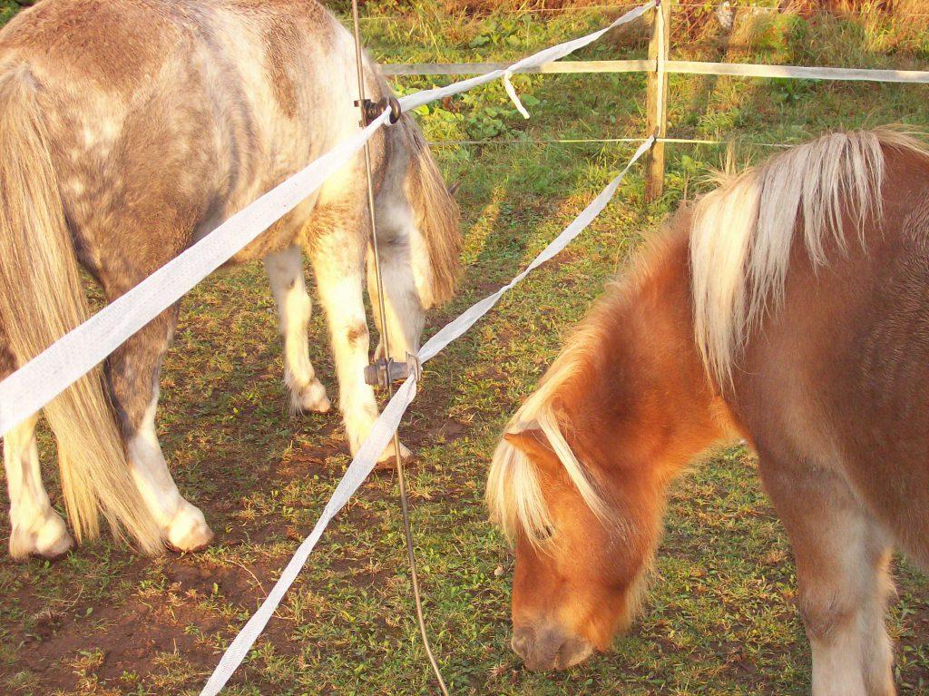 Die beiden Koppeln der vier Ponys grenzen direkt aneinander