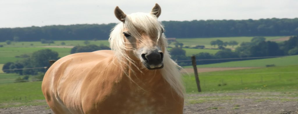 Zu dickes pferd altavistaventures Images