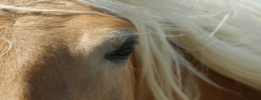 Das Equine Sarkoid