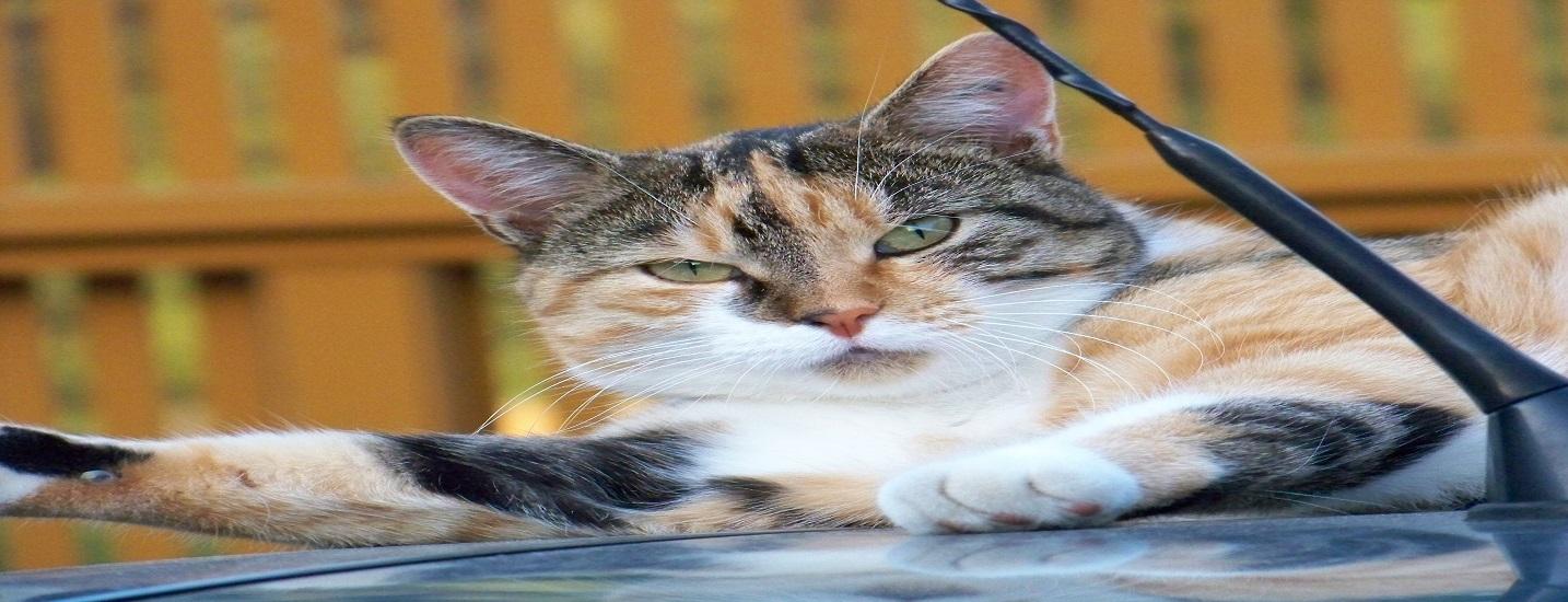 Katzen-Wordp.-teaser
