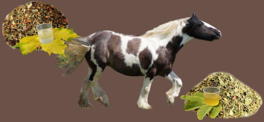 pferd-kraeuter