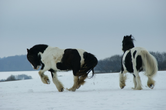 Pferde füttern im Winter