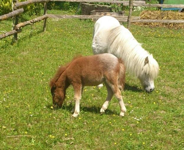 Fohlenfütterung Und Die Fütterung Junger Pferde Tierheilpraktiker