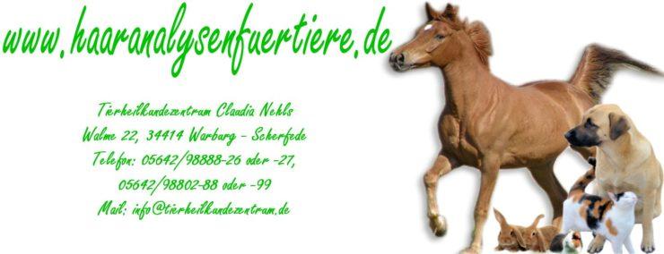 Haaranalysen für Pferde