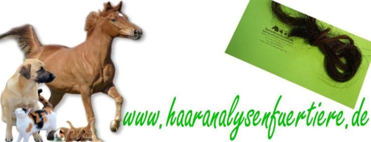 Haaranalyse Pferde